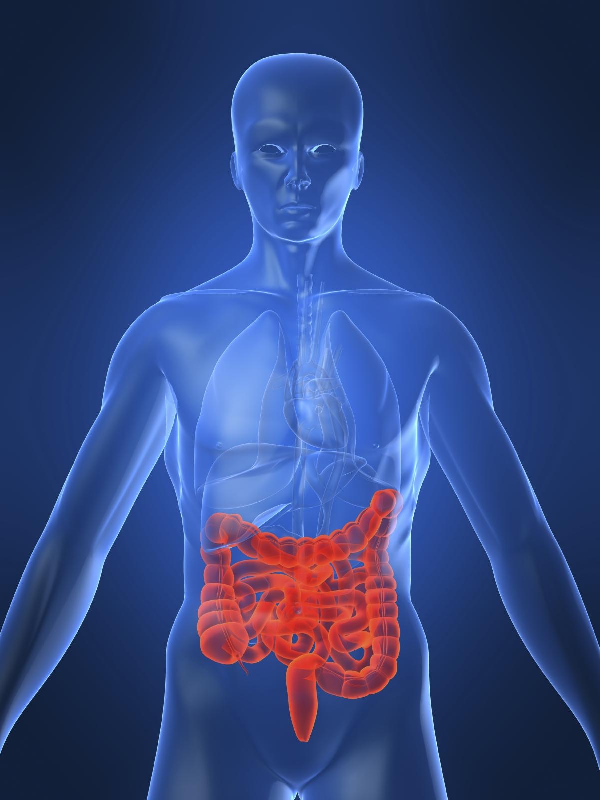 image of human intestines