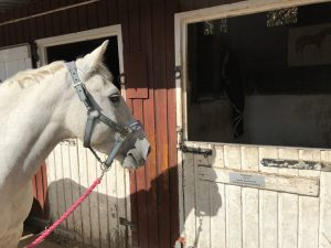picture of a horse looking at a name plate on stable door